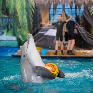 Дельфинарии, океанариумы Пироговского