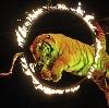 Цирки в Пироговском