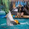 Дельфинарии, океанариумы в Пироговском